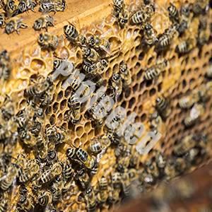 5G health implications. Health risks of 5 G. 5 G health implications and risks to health.   5G risks to bees.