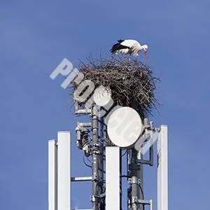 5G effects on birds